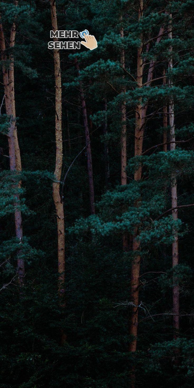 Pin Von Grun Auf Grun Wald Tapete Hintergrundbilder Whatsapp Hintergrundbild