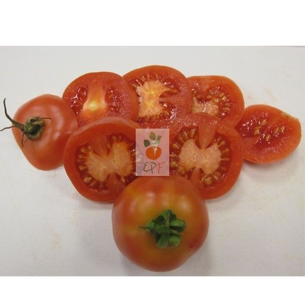 Tomate De Colgar Vegetables Tomato Food