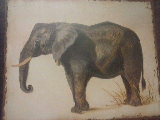 African elephant   African elephant, Elephant, African decor - photo#14