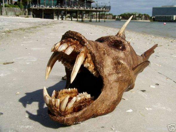 Weird Fish Skull 6