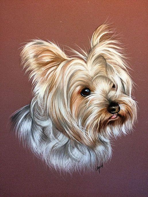Lespastelsdevir portraits chiens pastels pinterest - Dessiner un yorkshire ...
