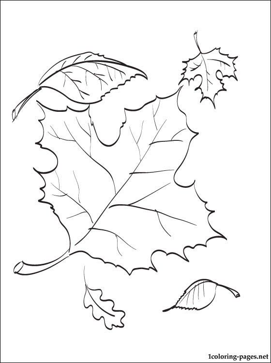 Autumn leaves coloring page | Coloring pages | Illustration ...