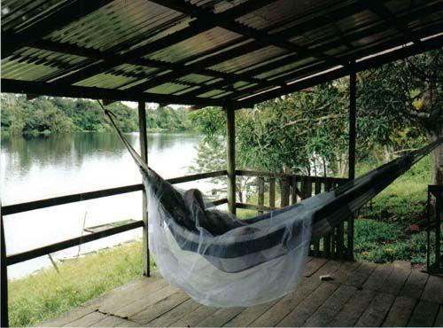 sleep in a hammock along the amazon sleep in a hammock along the amazon     amazon rainforest      rh   pinterest