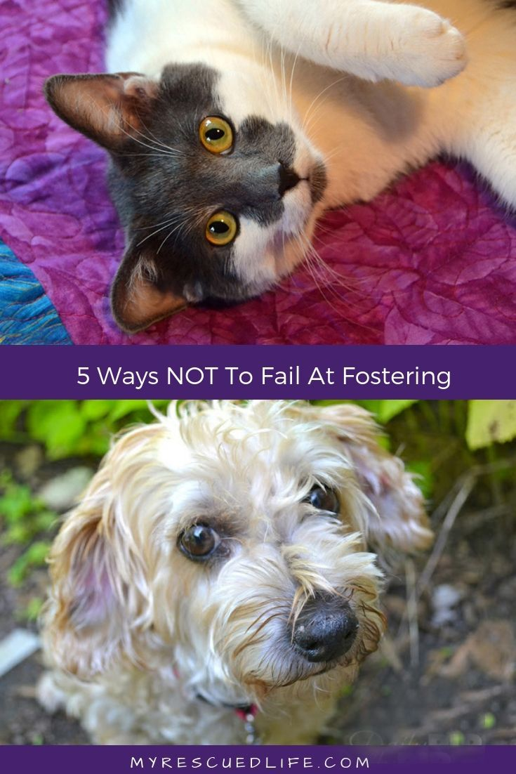 How NOT To Fail At Fostering A Cat Foster dog, Foster