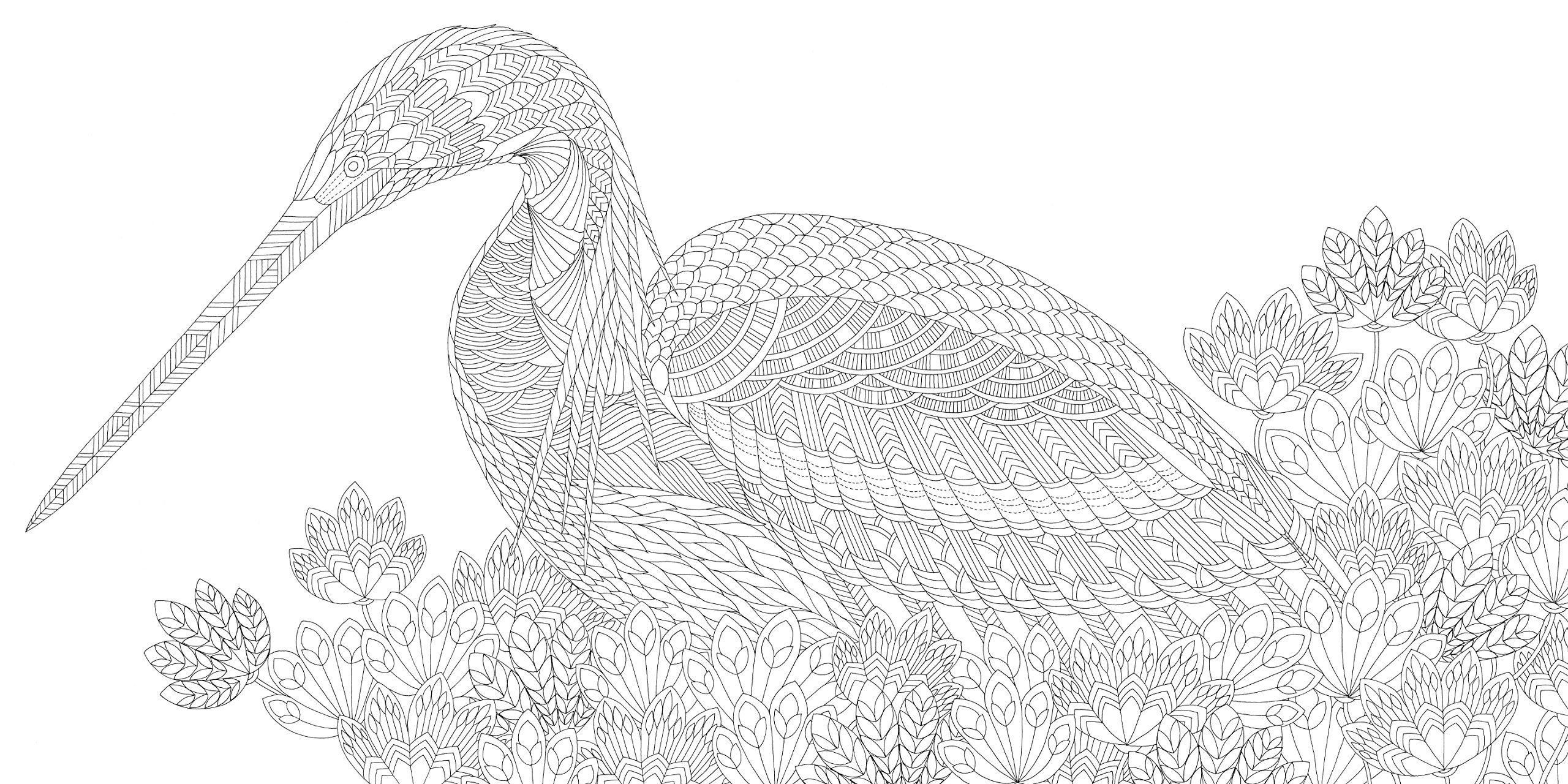Millie Marotta Coloring Book Best Of Amazon Beautiful Birds And Treetop Treasures A Millie