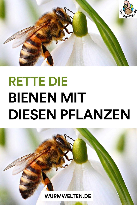 Pin Von Ellen Groner Auf Bienen In 2020 Bienenfreundliche