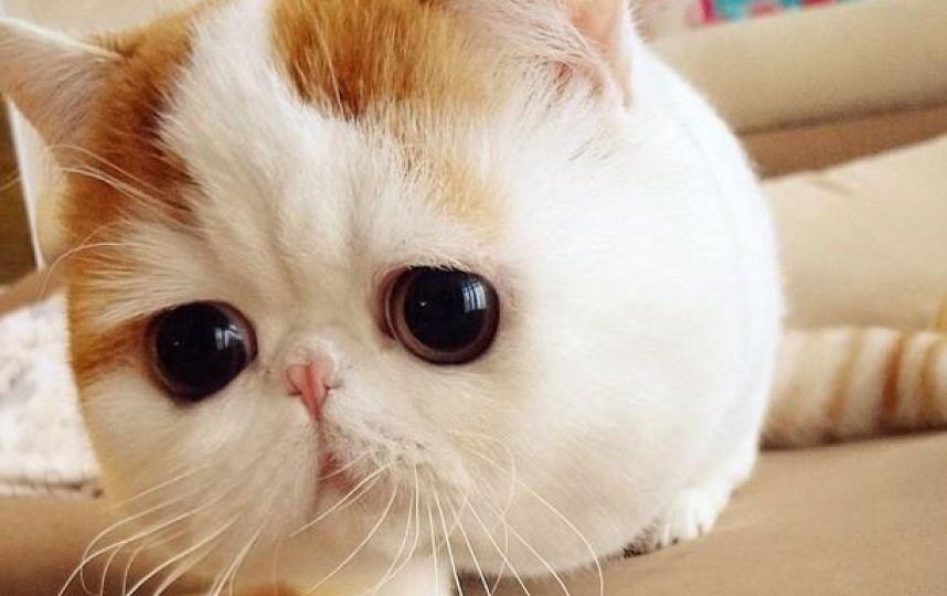 Fotos El Gatito Mas Lindo Del Mundo Publimetro Cutest Cats Ever Cute Animals Snoopy Cat