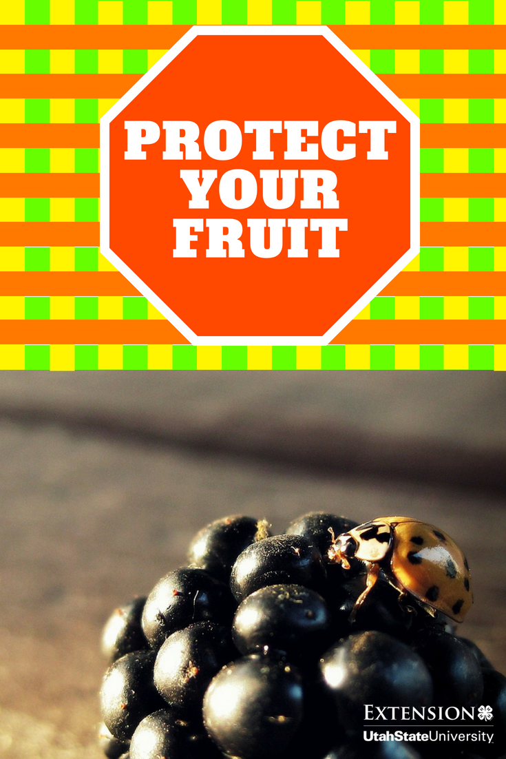 Don T Bug Out On Pest Control This Year Growing Fruit Fruit Trees Pests