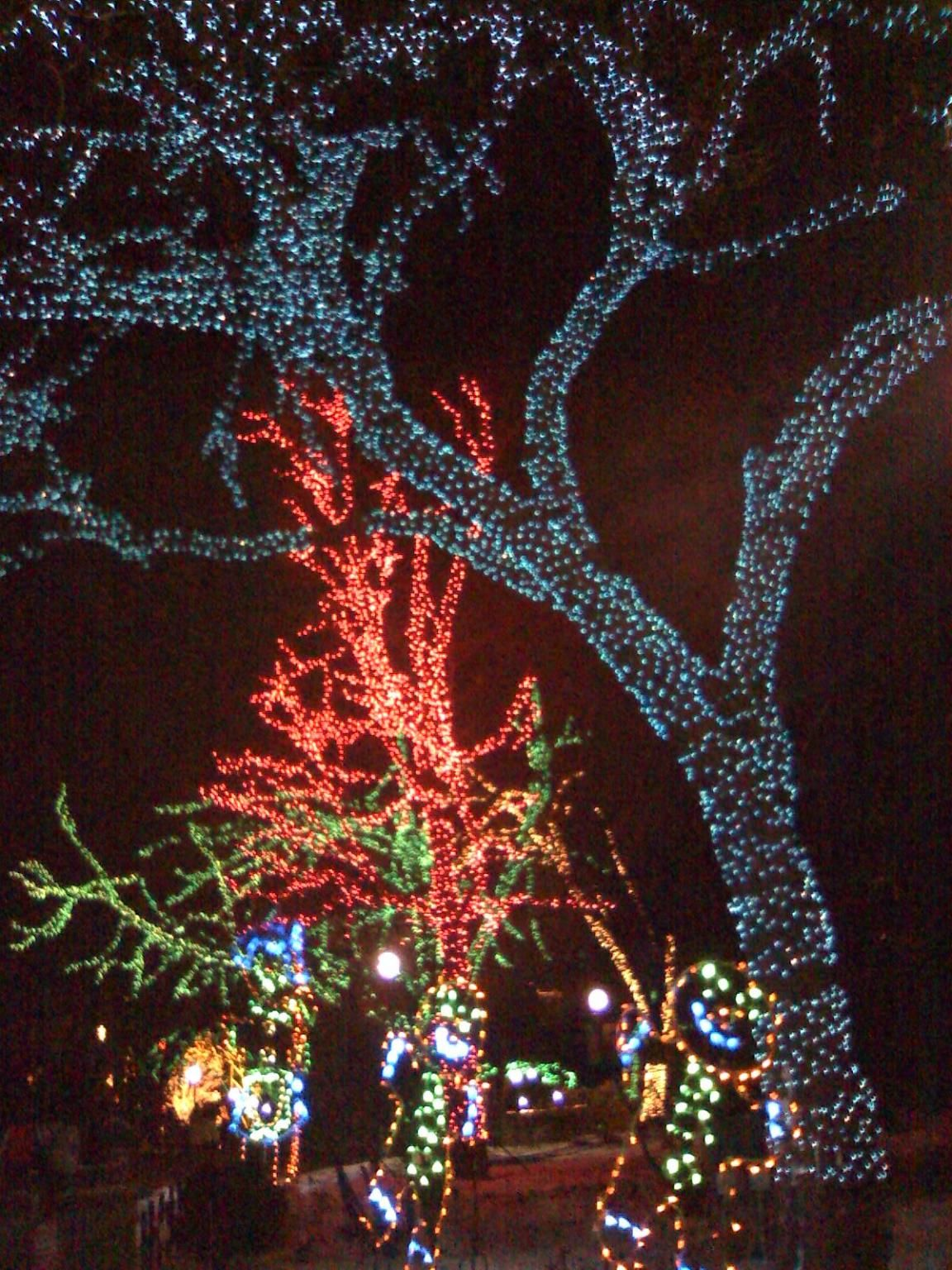 Christmas Lights Phoenix 2019 Zoolights at the Phoenix Zoo every Christmas | The Great Southwest