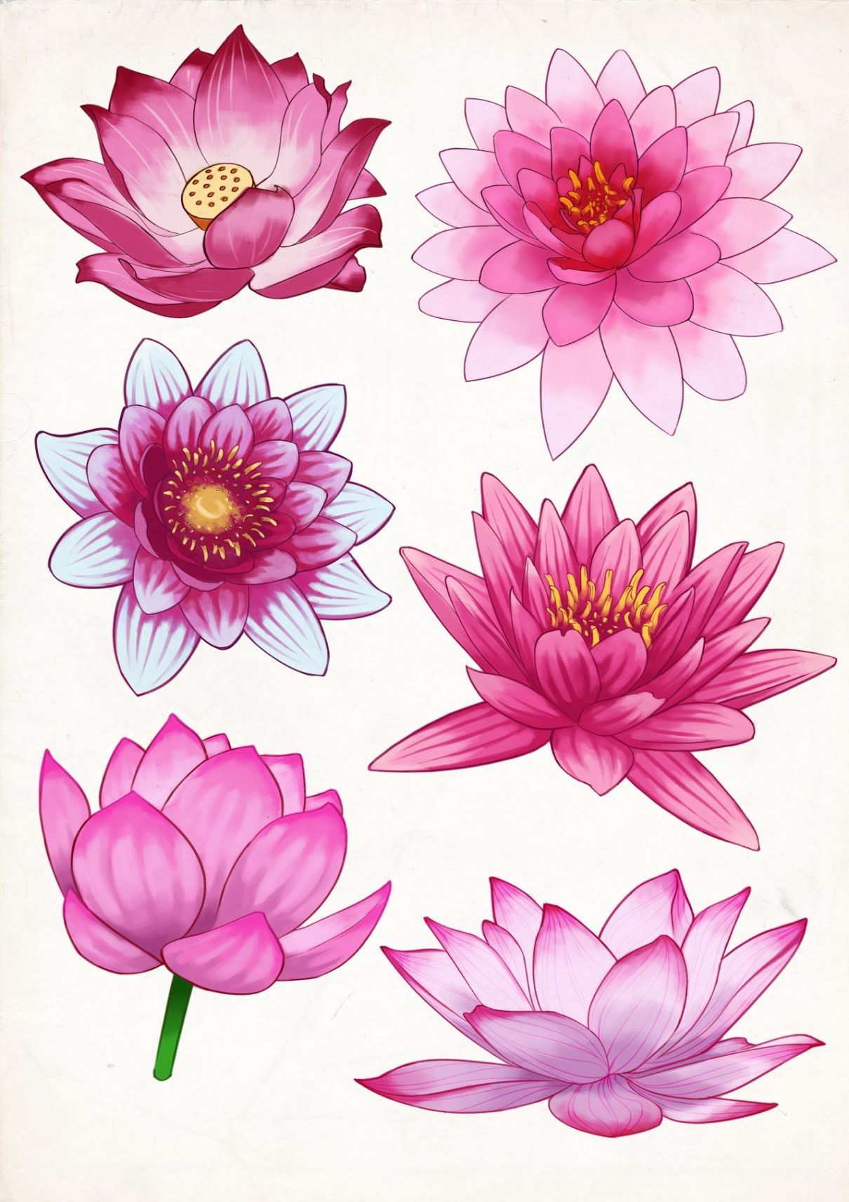 FelineTrickster Artwork — Some pink Lotus flower studies #FlowerTattooDesigns #lotusflower