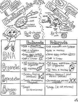 Prokaryotes V Eukaryotes W Teacher Guide Notes Student Fib Sketch Notes Sketch Notes Biology Notes Biology Classroom
