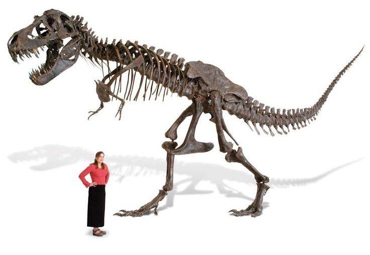 Le T-Rex taille réelle, une déco de jardin discrète et pas chère