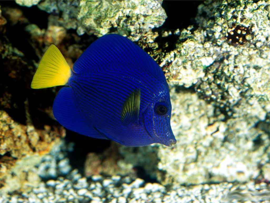 Coral reef fish free deep sea inhabitants coral reef for Reef tropical fish
