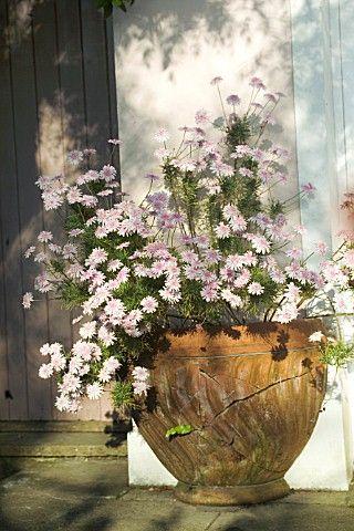 #garden #planter