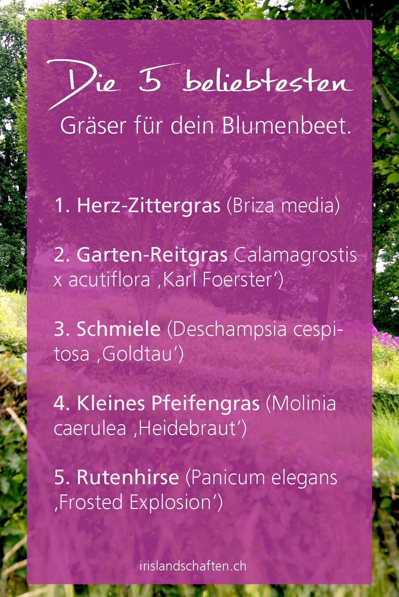 Beet Mit Grasern Gestalten Meine 12 Lieblinge Blumenbeet Gestalten Gras Beete