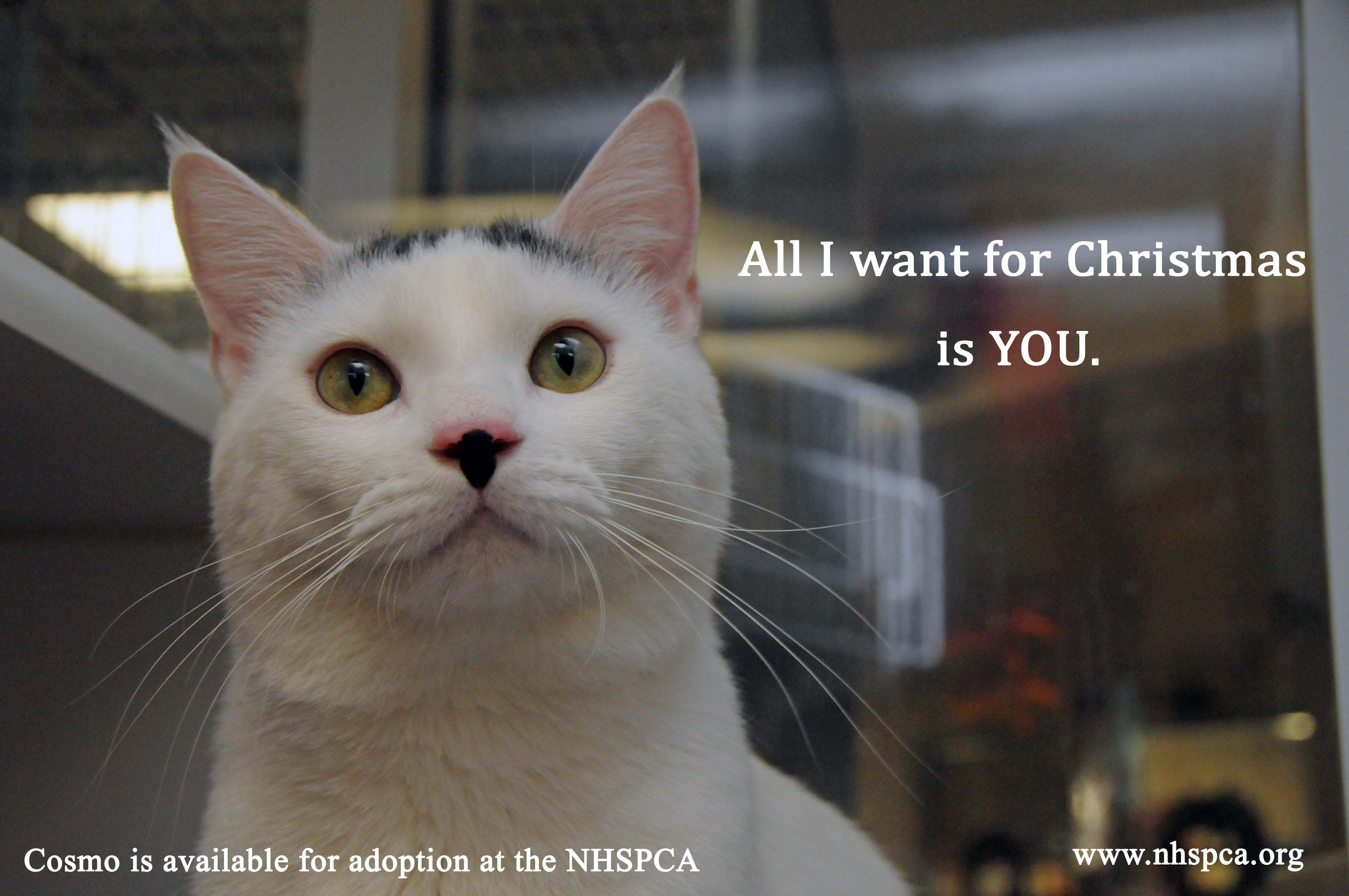 Pick Your Cat, Pick Your Price! Now through December 23