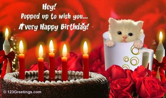Cats and birthdays my favorite things happy birthday to you send an ecard bookmarktalkfo