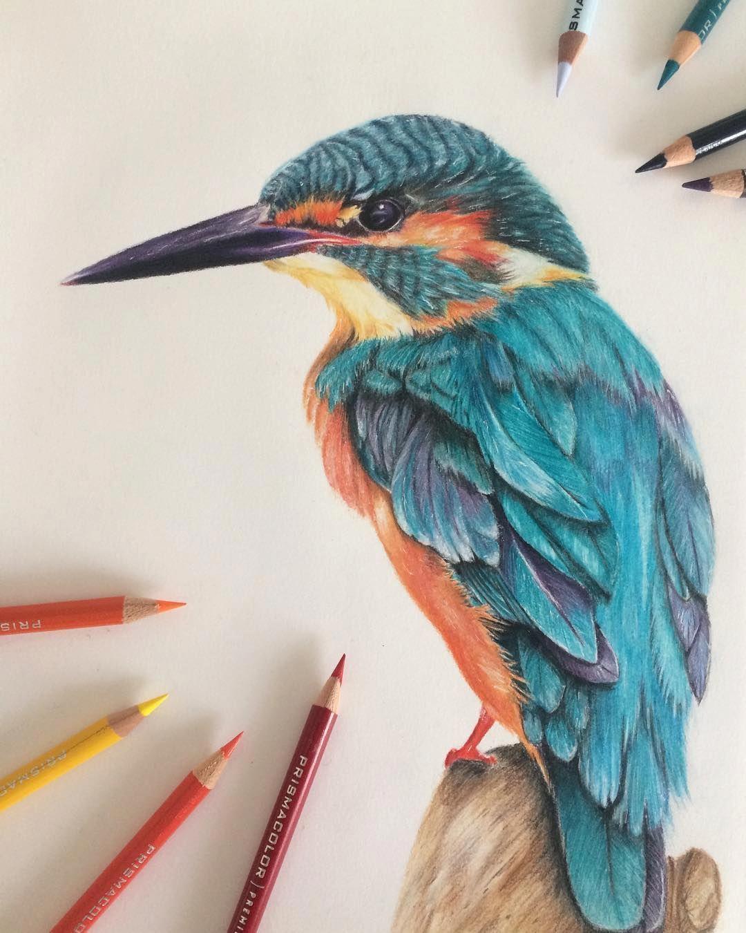 Benjamim Fidalgo Ben Fine Art On Instagram Al Parecer El Mundo Es Hoy En Dia En 2020 Arte De Aves Lapices De Colores Dibujos Arte De Lapices De Color