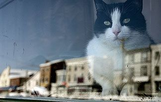 Should Your Cat Be Kept Indoors Or Outside Pet Parent Cats Your Pet