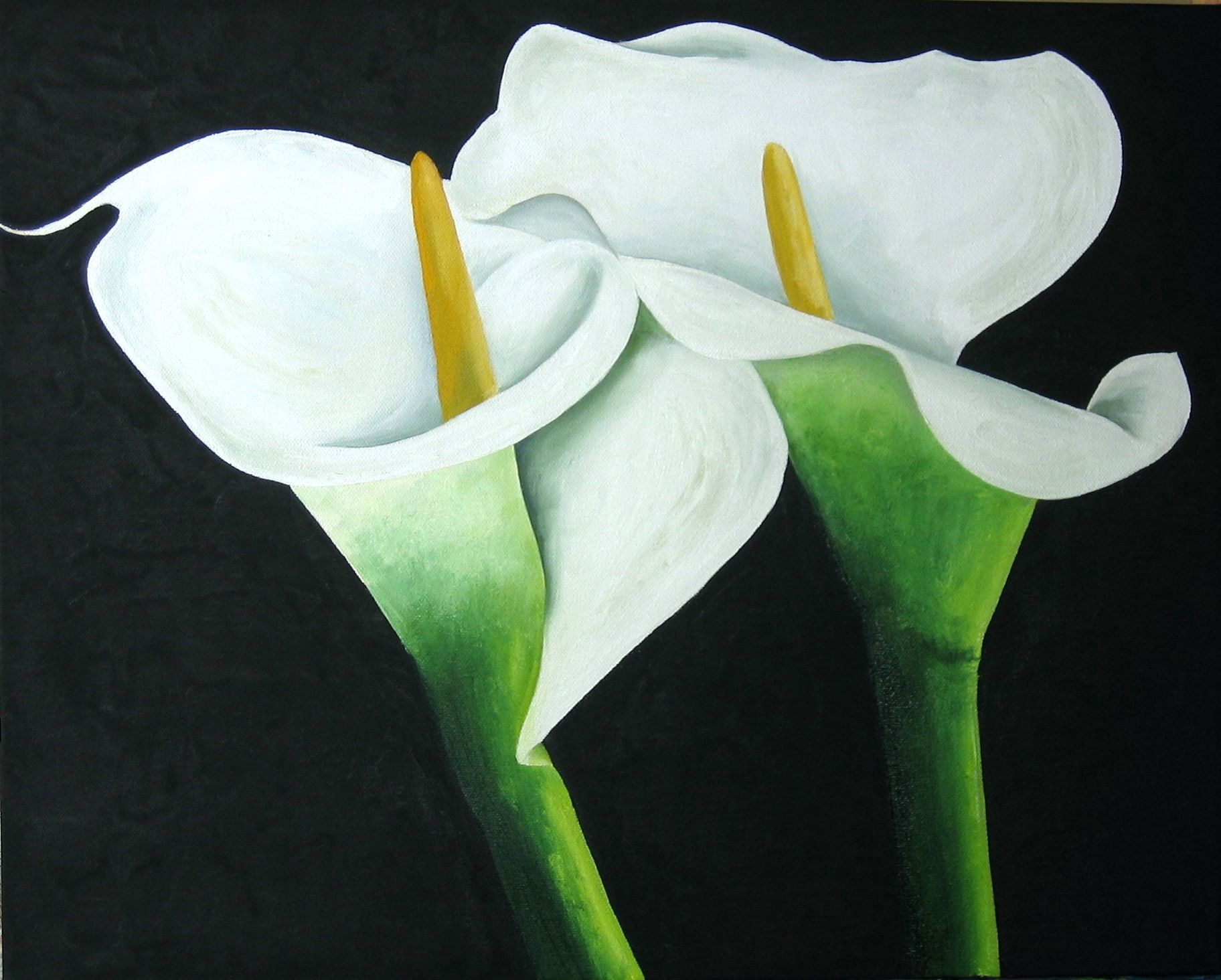 Flower meanings lily - Calla Lilies Jpg 1824 1464 Pixels