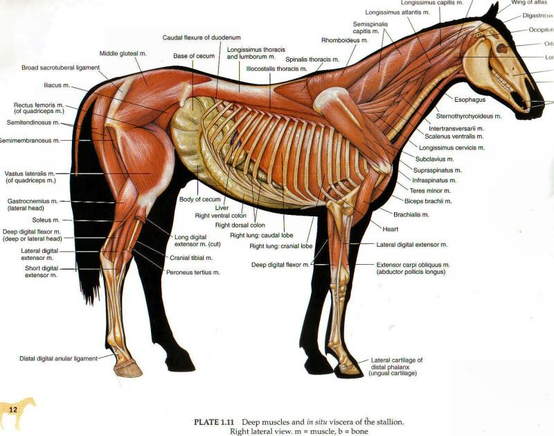 cold backed horse - Google Search | horse health and happiness ...