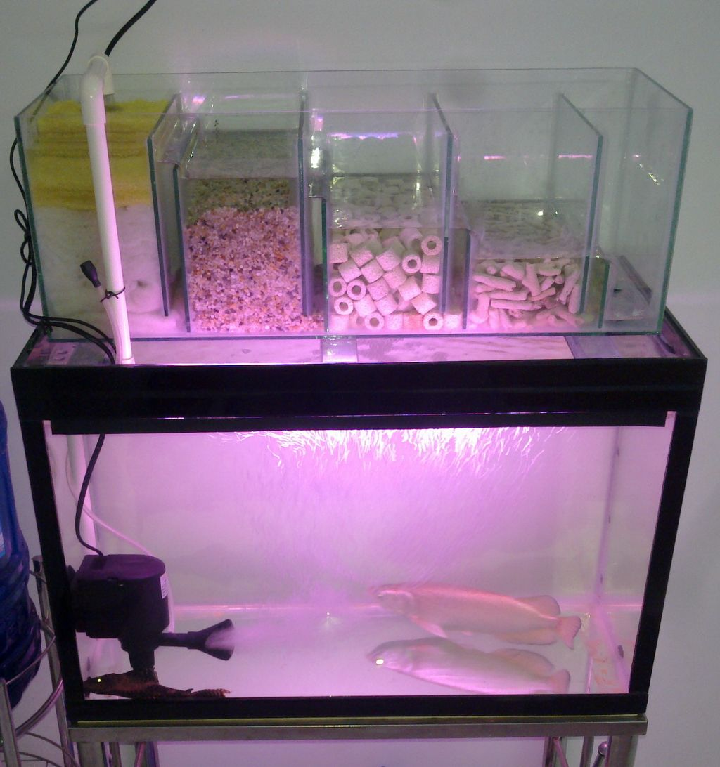 Pink fish tank aquarium with filter - Australian Arowana Aquarium Water Filter System 15 10 2013 Fish Aquarium Plants Pinterest Aquarium Water And Water Filters