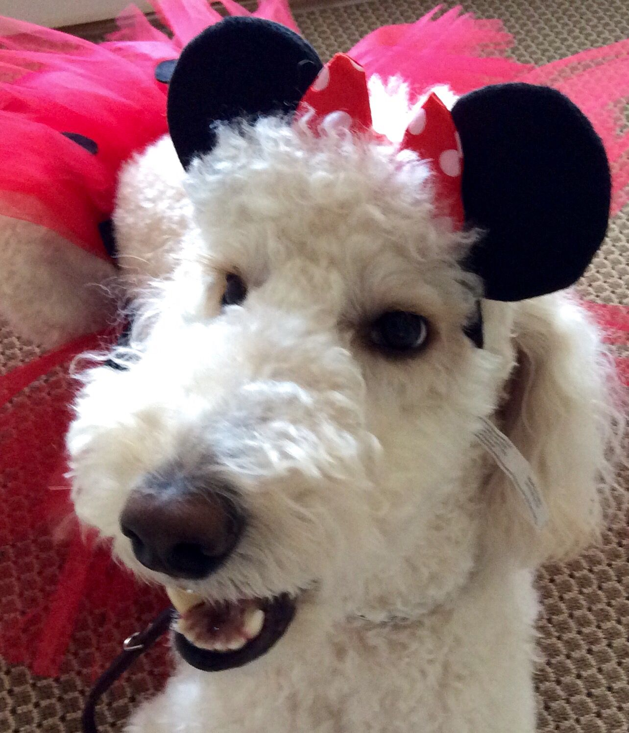 Minnie Bee... Being Minnie Mouse for Halloween