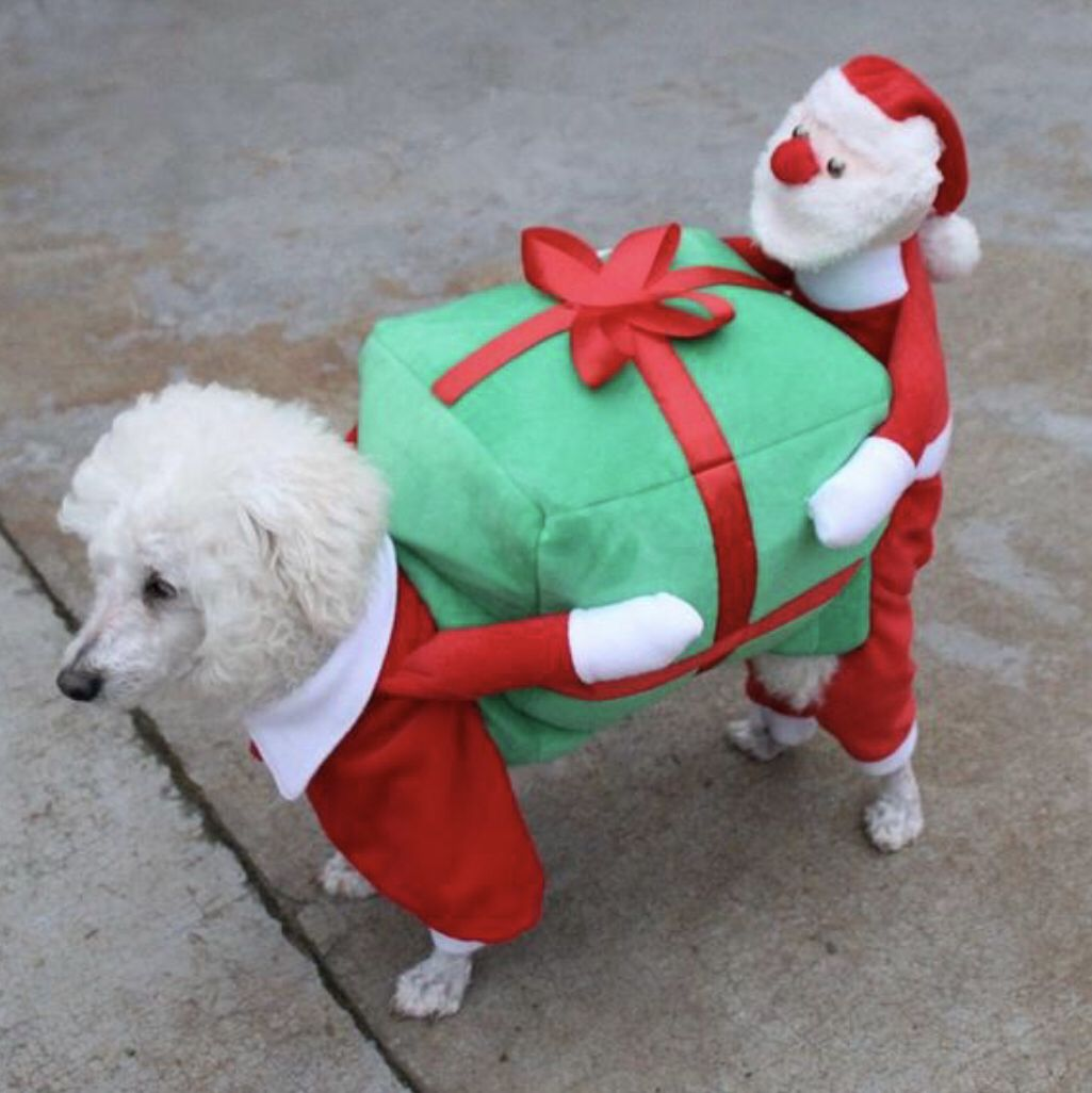 Cute Dog Helping Santa To Carry Present Costume Christmas Dog