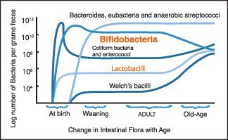 Gut Microbiota Probiotics Prebiotics And Synbiotics