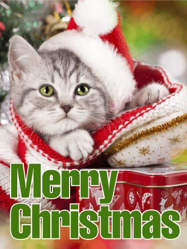 Pin by birthday greeting cards by davia on christmas cards pinterest explore cat christmas cards christmas kitten and more m4hsunfo