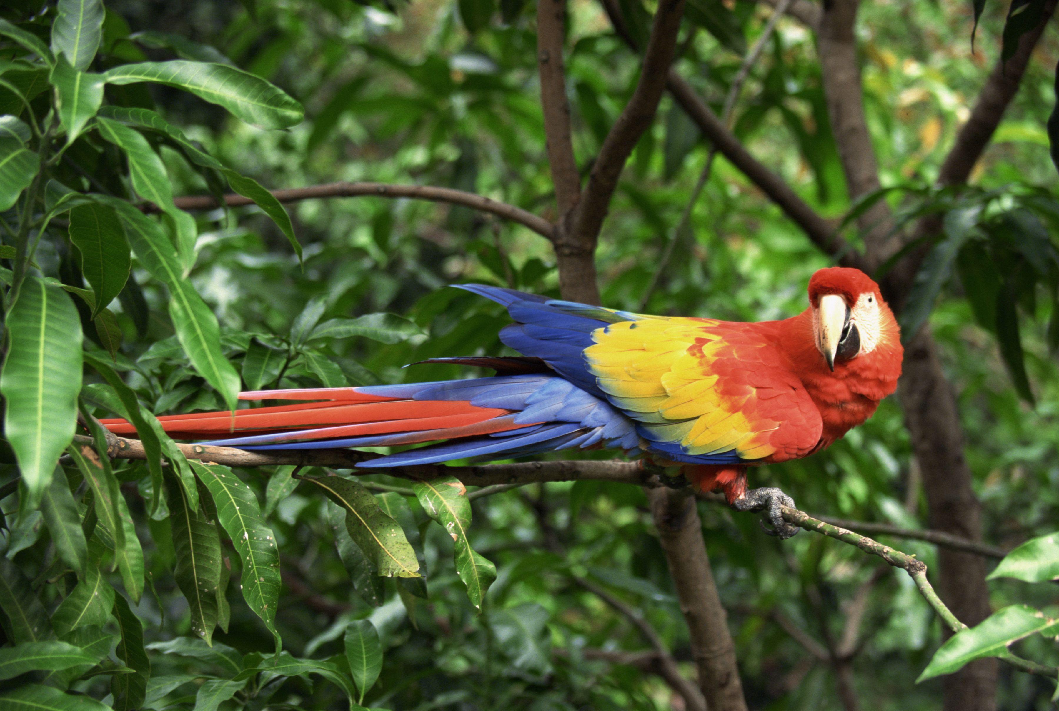 Aves y animales en el bosque tropical Bosque tropical