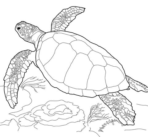 Loggerhead Sea Turtle Coloring page | Coloring Pages | Pinterest