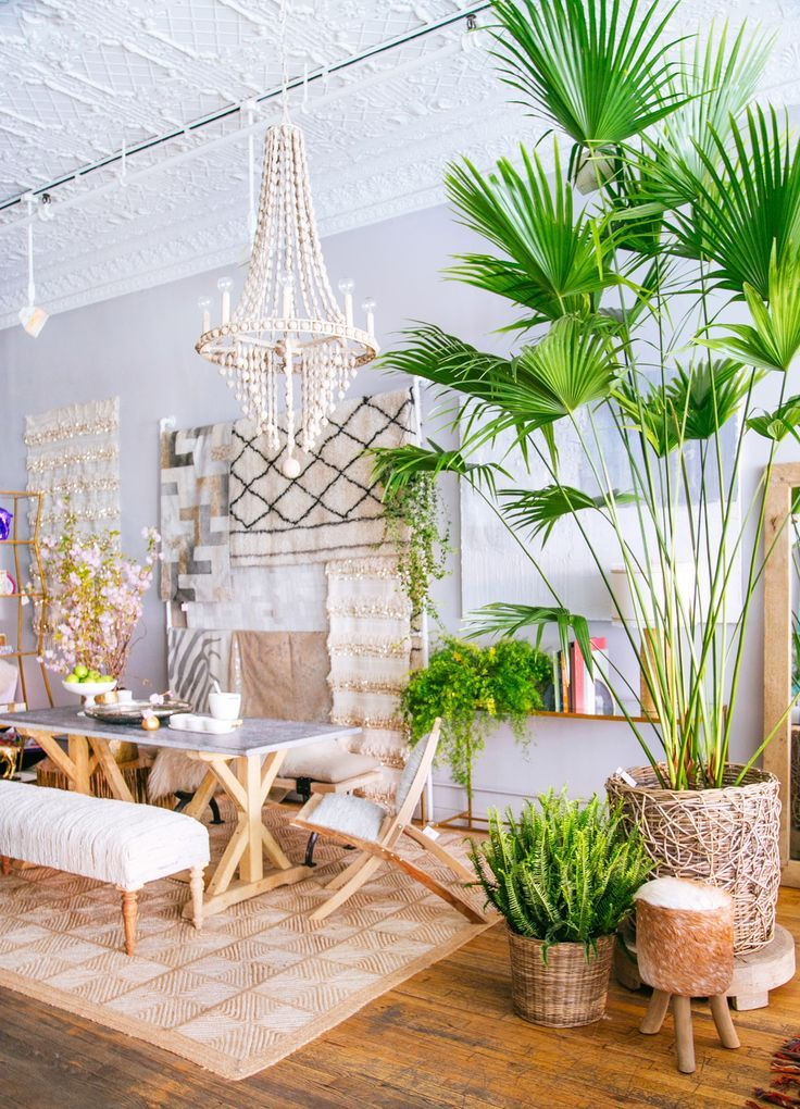 tropical home decor 12 lovely indoor house trees  with images  tropical home decor tropical home decor fabric coordinated 12 lovely indoor house trees  with
