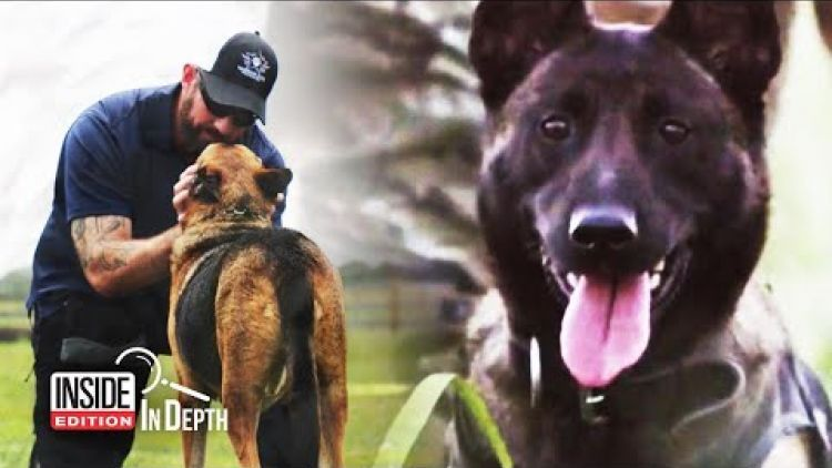 Military Dogs Often Return From Service Broken And Damaged But