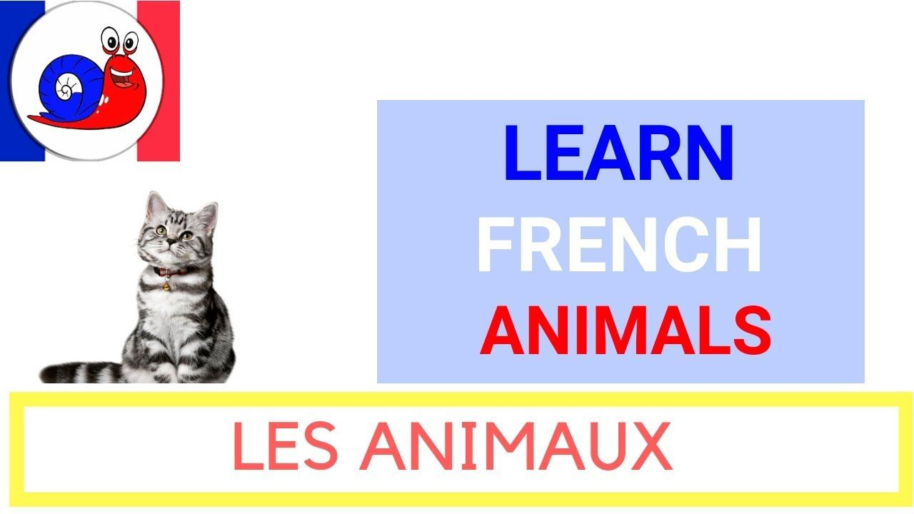 10++ Animal names in french ideas in 2021