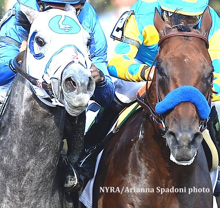 Ray Paulick on | Thoroughbred Horse racing | Horses, Horse