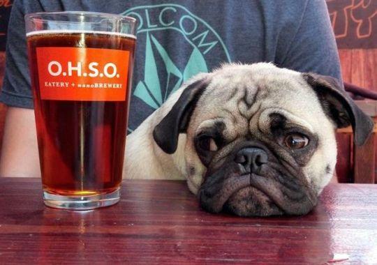 20 restaurants with dogfriendly patios Dog friends