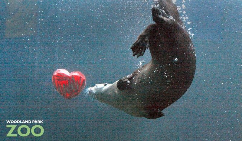 The Way To An Otter S Heart Fun Valentines Day Ideas Otters Zoo Animals