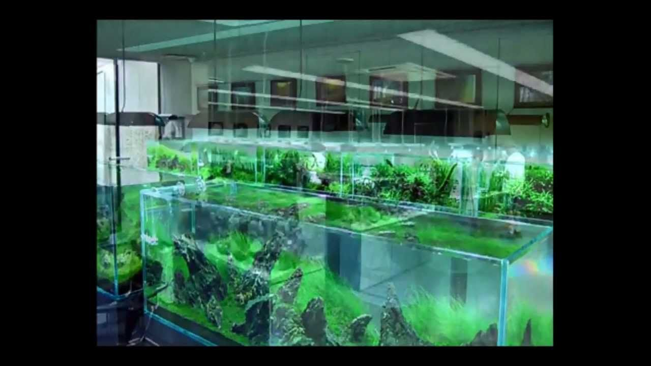 The Famous Aquascape Artist Takashi Amanou0027s Gallery In Japan, Very  Beautiful!