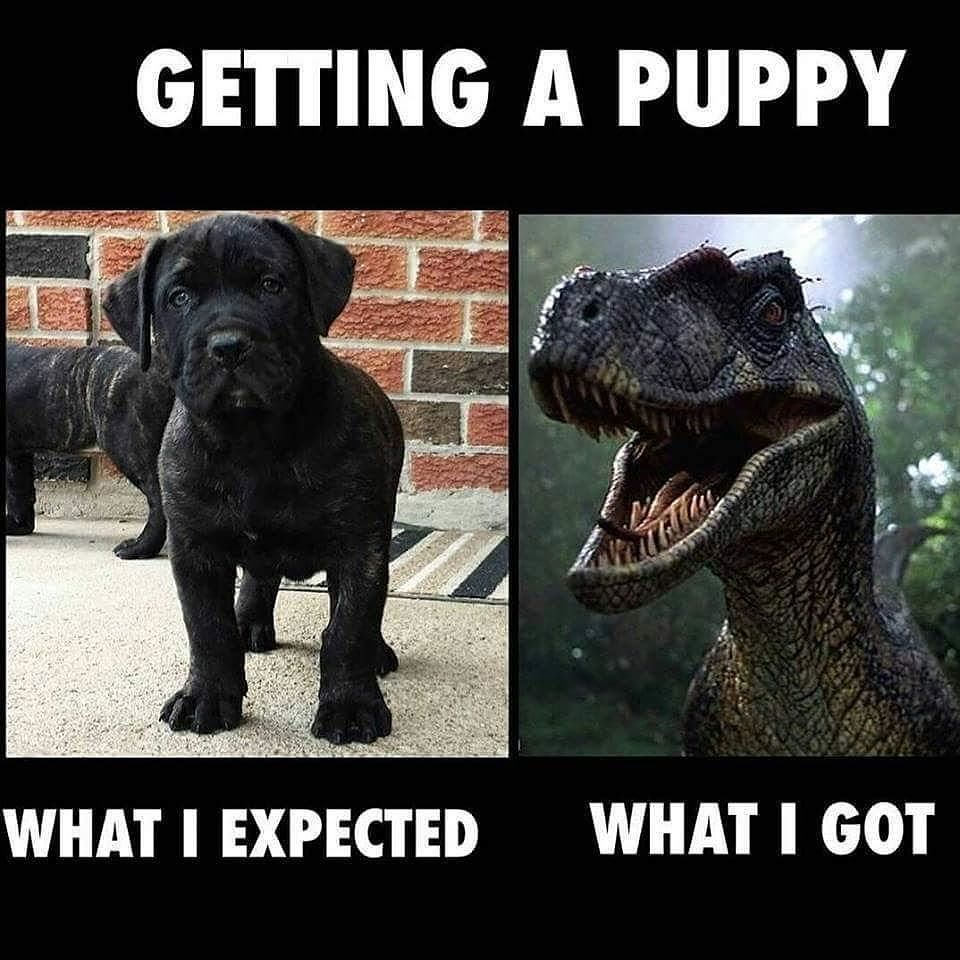 Who Can Relate Tag A Friend Yyc Yycdogs Meme