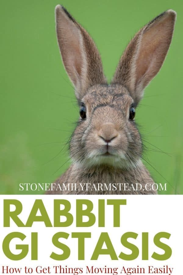 Rabbit GI Stasis How to Get Things Moving Again Easily - Raising farm animals, Raising rabbits, Rabbit, Animals, Indoor rabbit cage, Farm animals - What does it mean when your rabbit's not pooping  You could be looking at GI stasis, which can be dangerous to your bunny  Click over for help with this
