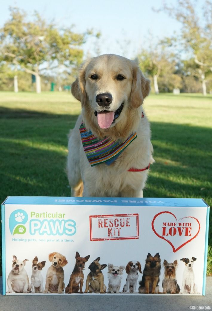 Get Your Shelter A Rescue Kit From Particular Paws Paws Rescue