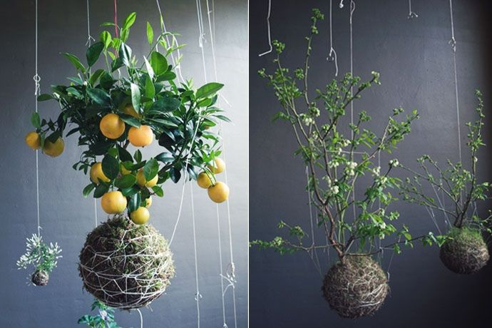 Indoor Gardening josaelcom