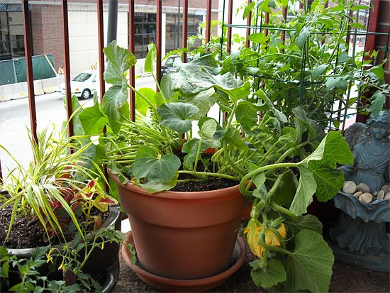15 Ideal Vegetables That Grow Well In A P*T Or Container 400 x 300