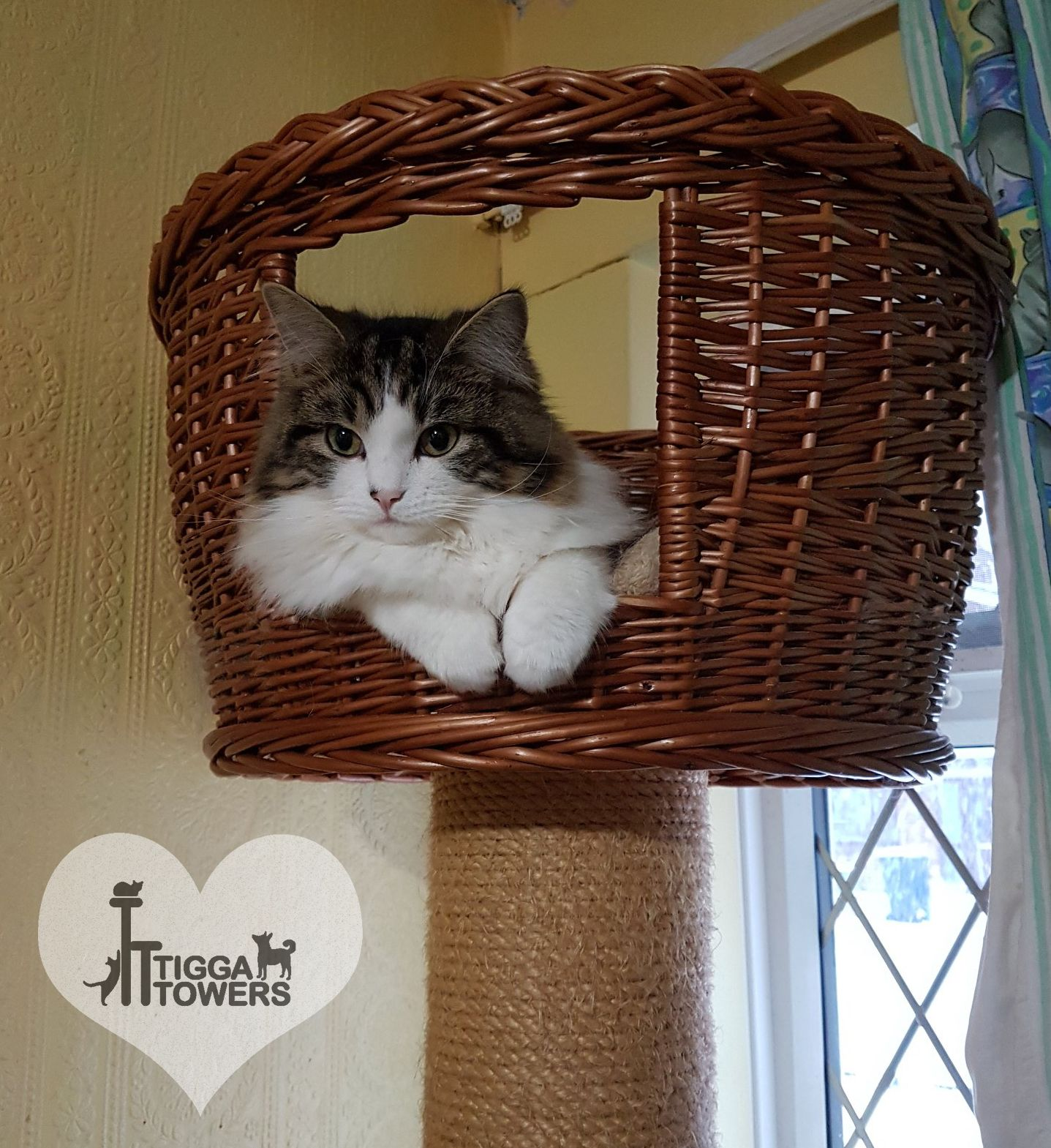 This Very Pretty Kitty Cat At The Top Of Its Cat Tower Is Our