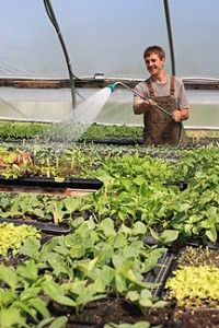 Helpful hints on watering plants in your greenhouse garden