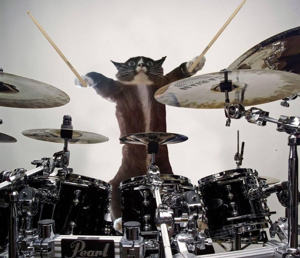 Pin by Glenn Dean on drums Drums, Cats, Image cat