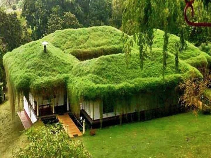 Moss Roof Talking About Going Green Green Roof Green Architecture Roof Garden