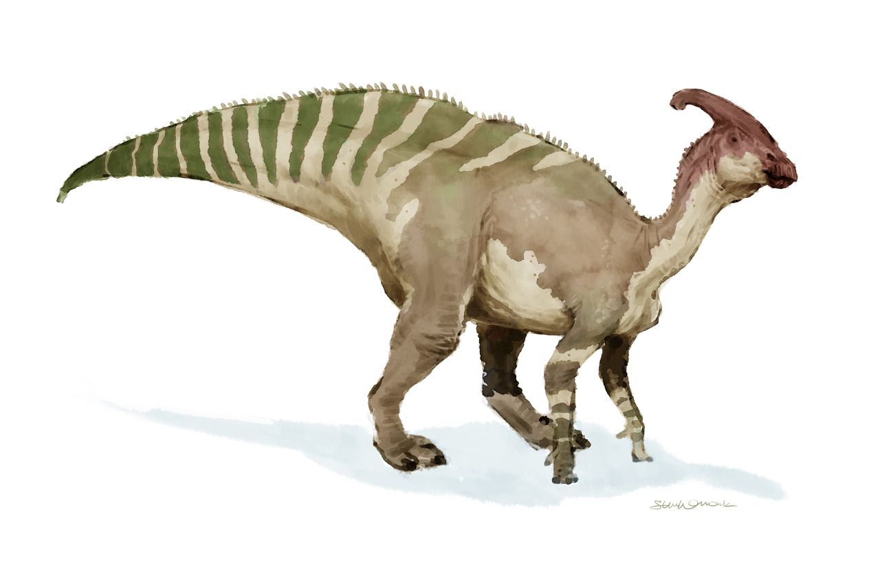 Uncategorized Sketches Of Dinosaurs steven womack a quick digital sketch of one my favorite dinosaurs parasaurolophus