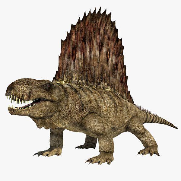 dimetrodon - Google-Suche | LEO | Prehistoric animals ...
